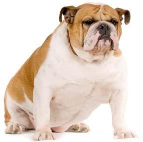 The Bulldog NICHE!